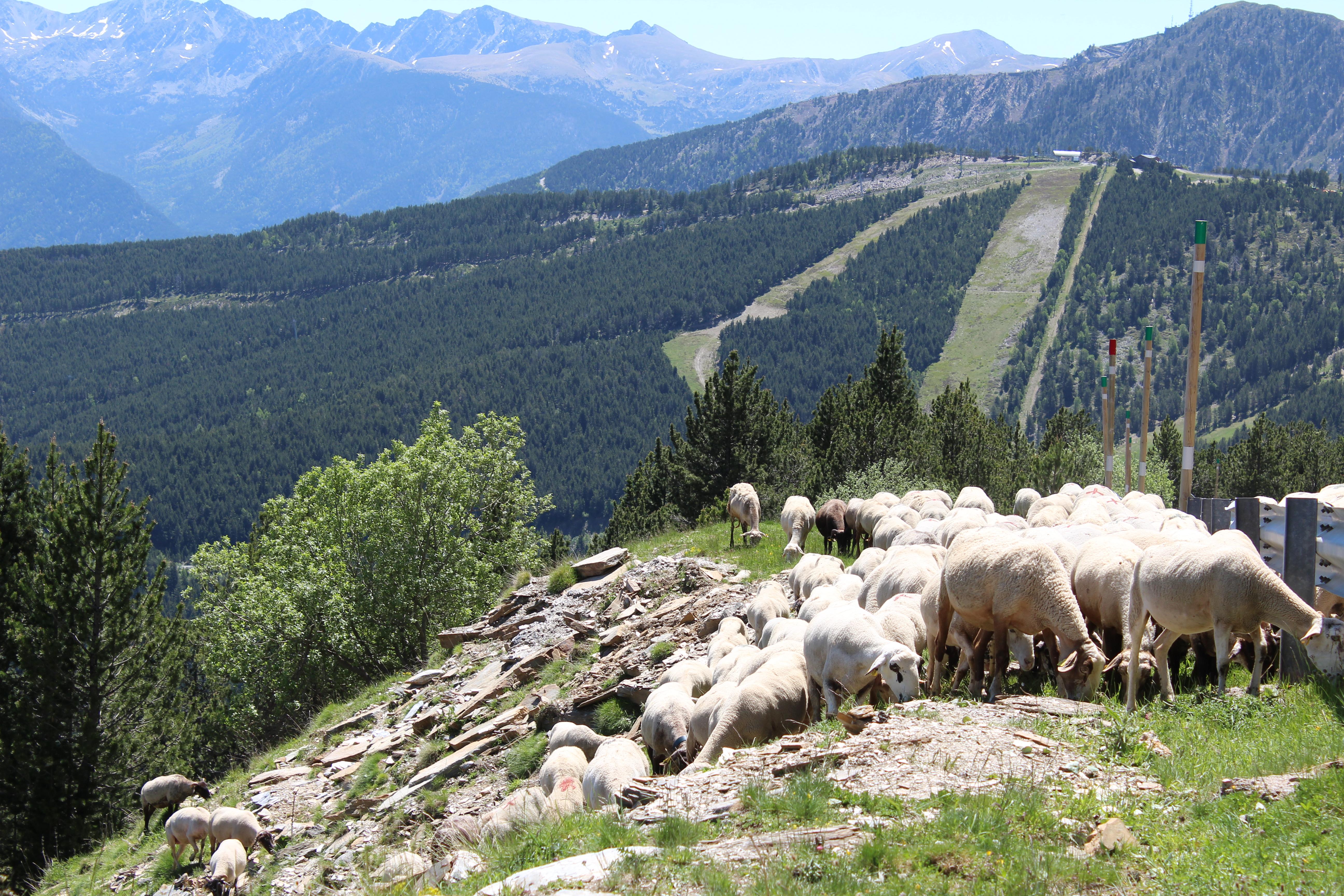 Vistes de Pal, el Pic de Carroi i la Vall del Madriu - RTVA