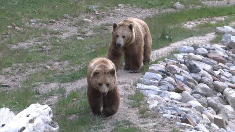 El parc d'animals de Naturlàndia romandrà tancat fins que compleixi les mesures que exigeix el Govern