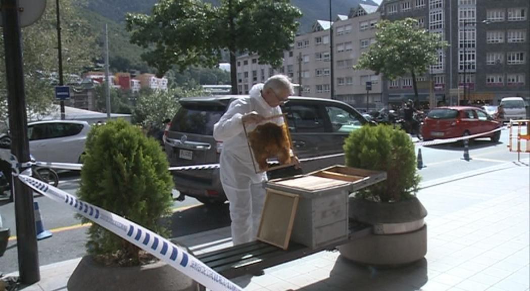 Un eixam d'abelles davant de Govern sorprèn els vianants
