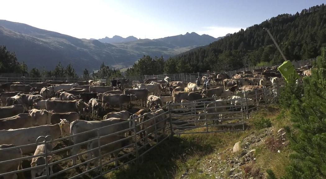 Canillo vol impulsar una cooperativa agrícola per assegurar la continuïtat del sector a la parròquia