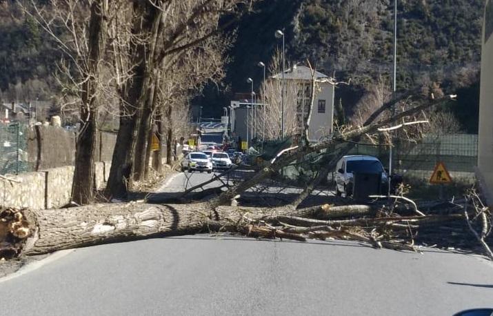 Cau un arbre enmig de la carretera d'Aixovall