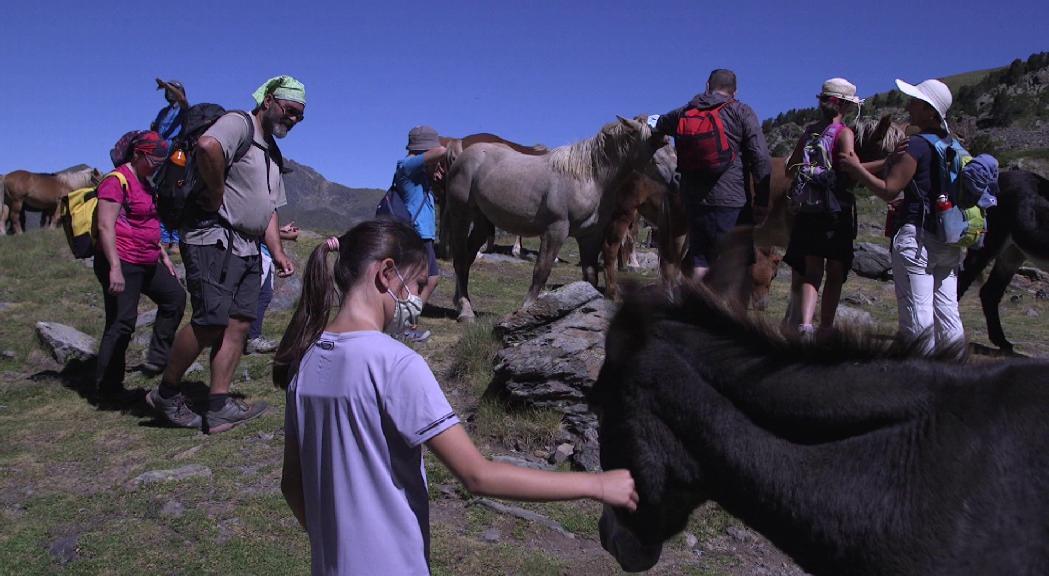 Conèixer la ramaderia d'altura amb rutes guiades, èxit de la proposta turística del comú d'Ordino