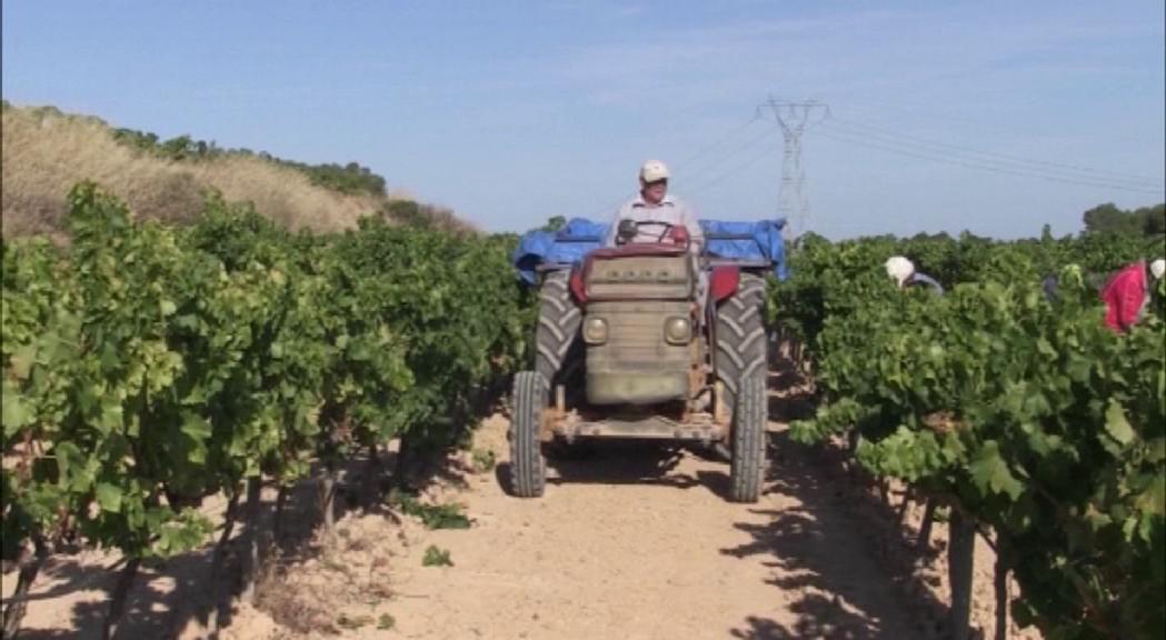 Diversos temporers atrapats a Andorra s'ofereixen per treballar al sector agrícola dels països veïns