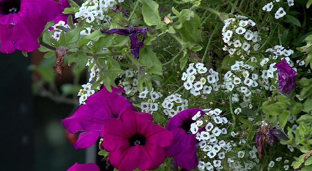 Encamp reparteix entre els veïns compost per a jardineria de forma gratuïta