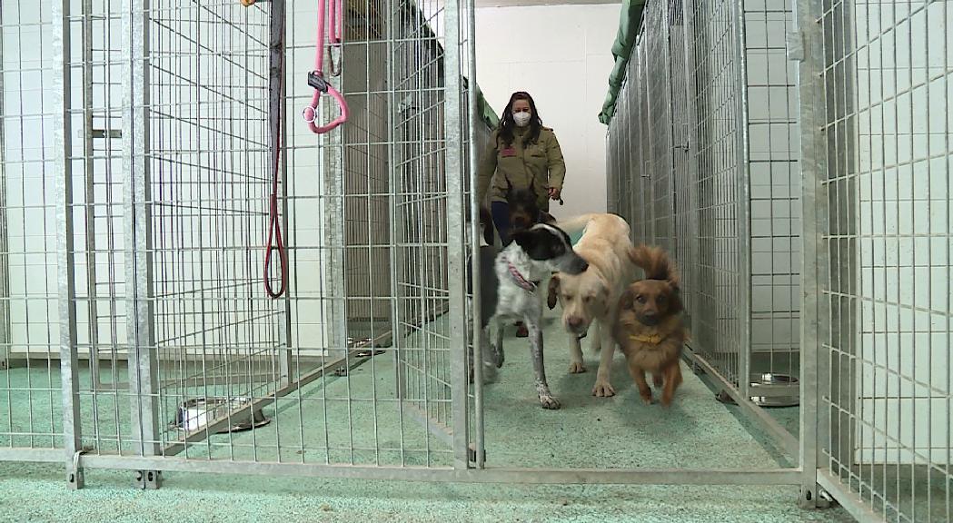 El Govern endureix les condicions dels centres que acullen animals de companyia