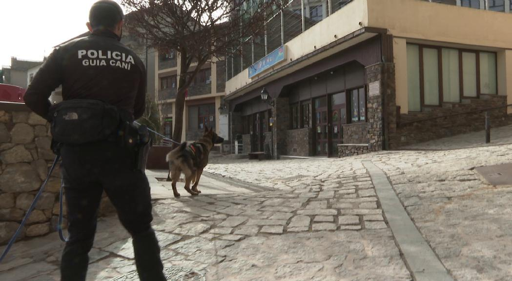 Reportatge: com s'entrenen els gossos de la policia per trobar fugitius i explosius