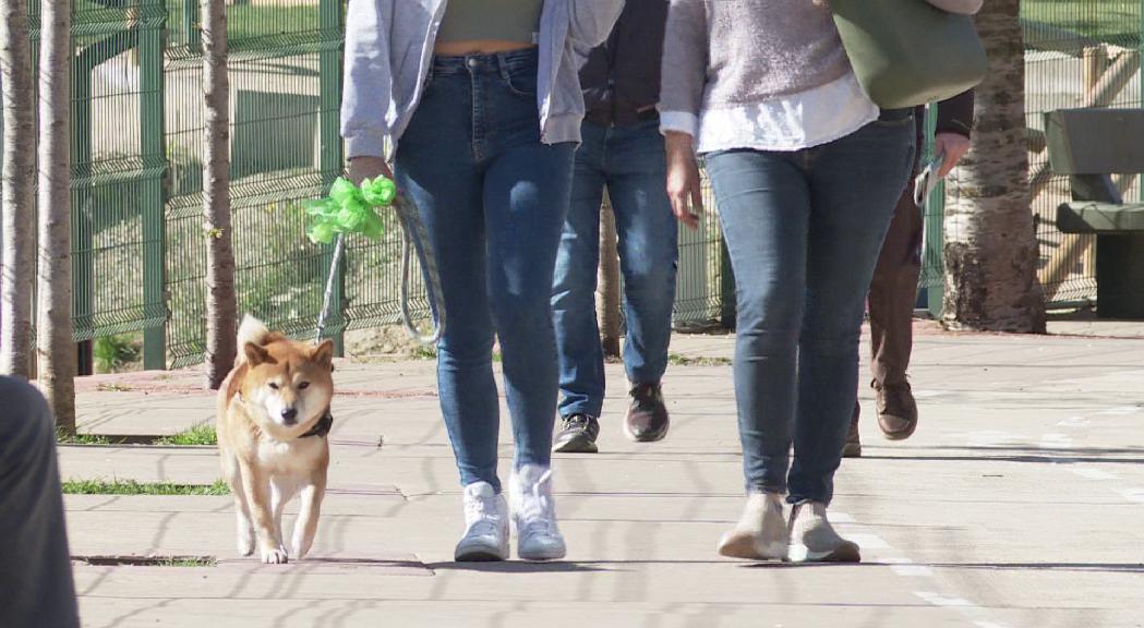 Els veterinaris voldrien que els comuns subvencionessin l'extracció d'ADN per al cens caní