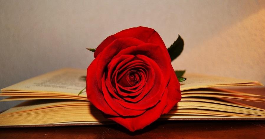 10 propostes per regalar un llibre aquest Sant Jordi