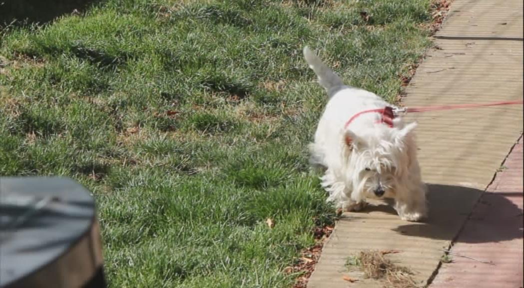 L'anàlisi de l'ADN lligarà les tifes de gos als seus amos
