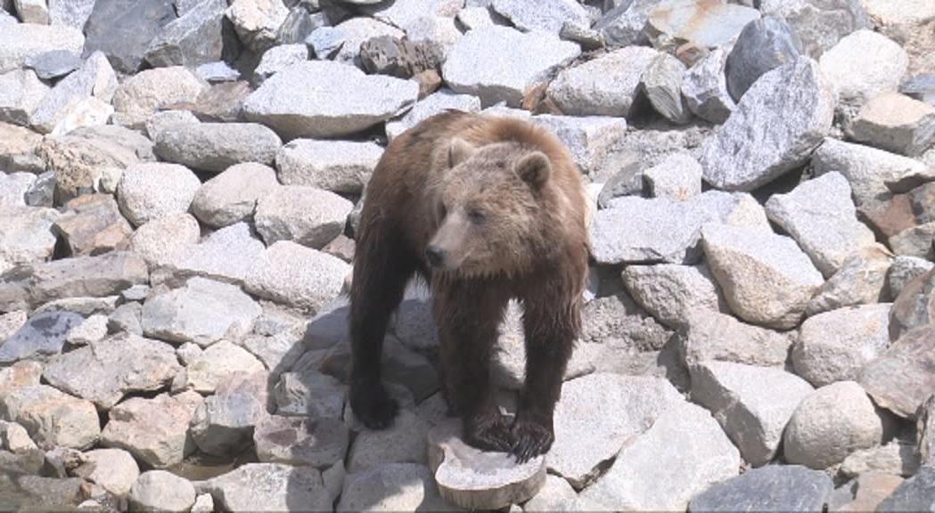Acomiadats el director i sotsdirector del parc d'animals de Naturlàndia per la mort de l'ós