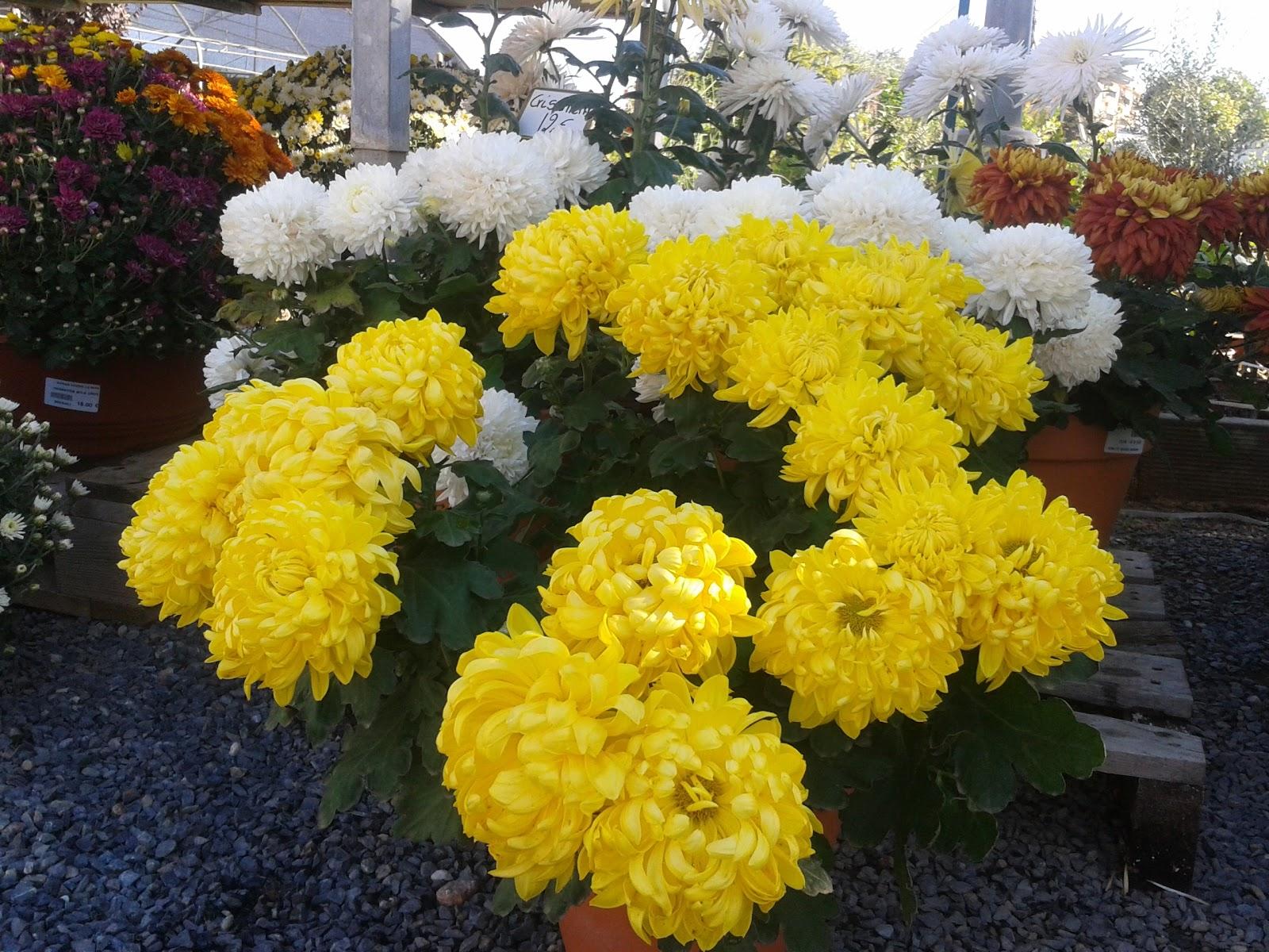 Setmana de visita al cementiri