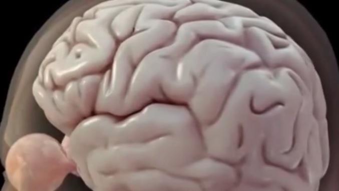 L-Mental - Programa 6