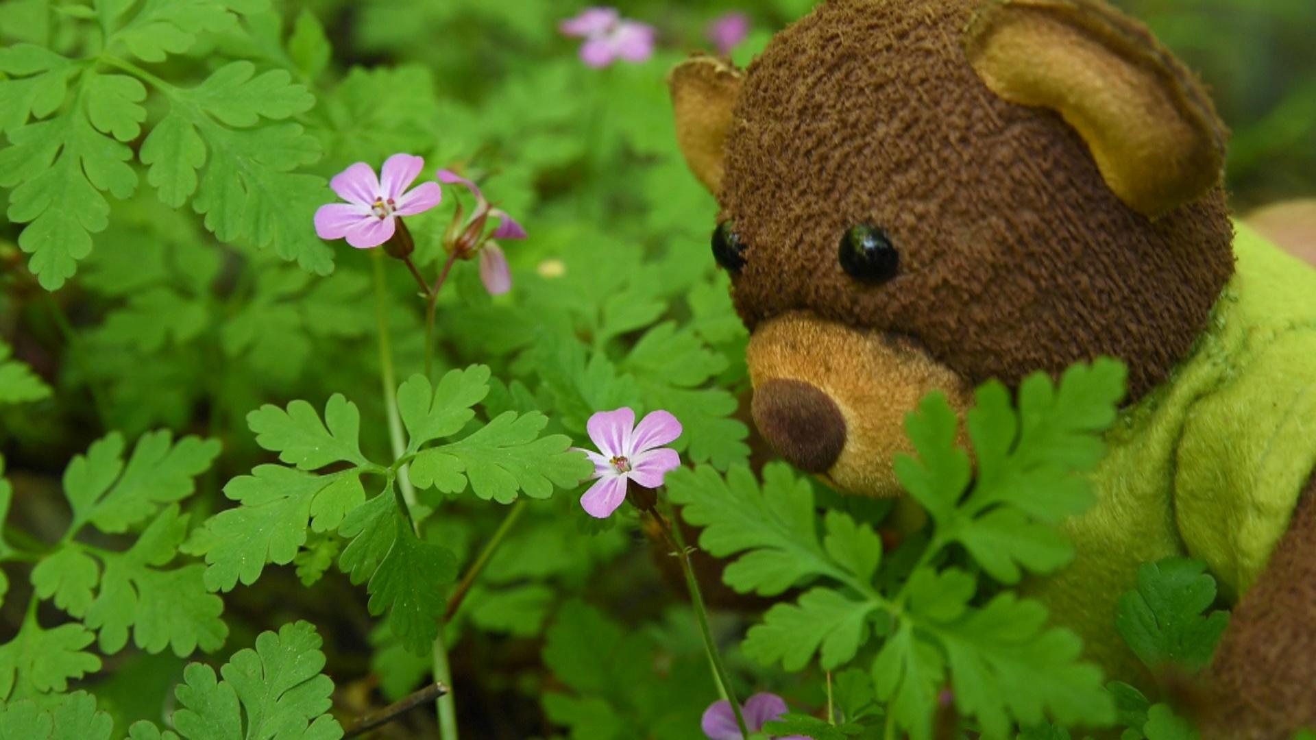 Les coses de la Martina capítol 17 -  L'ós torna al bosc