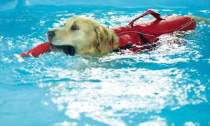 Les nostres mascotes es tiren a la piscina