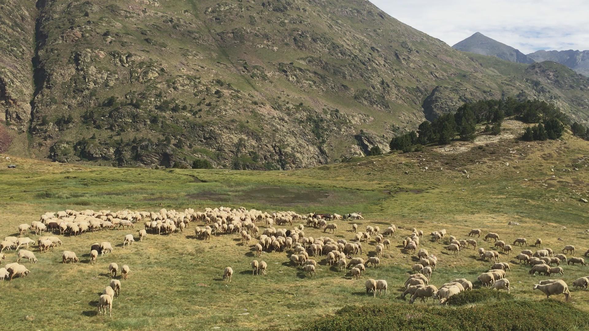 Memòries d'arxiu - Enora: els pastors