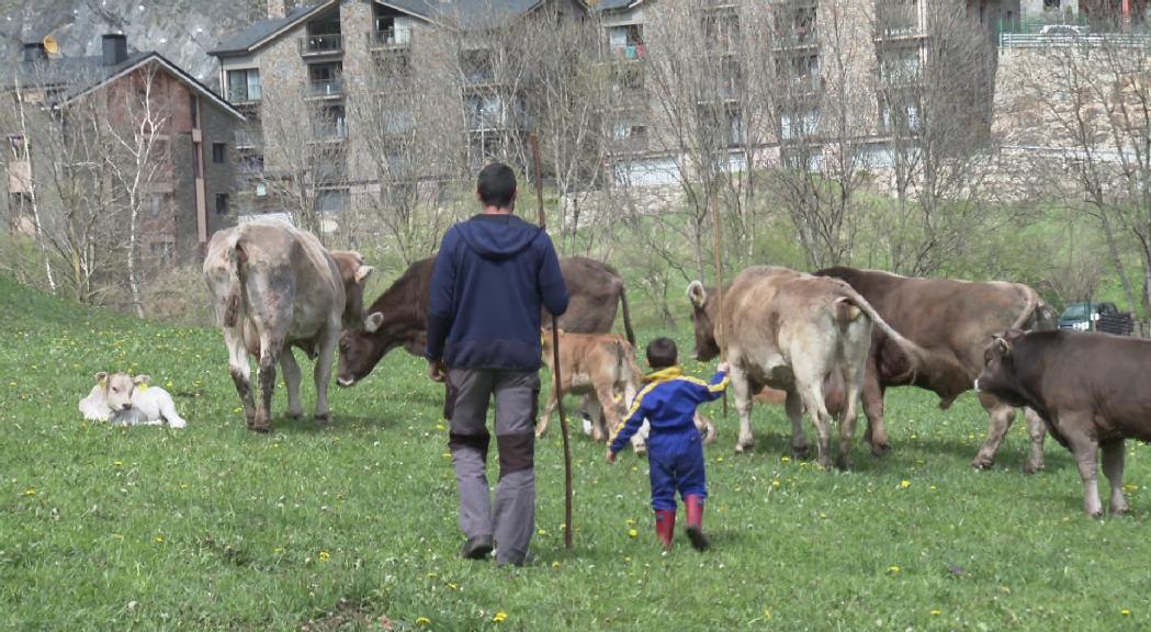 Els ramaders d'Ordino reivindiquen una professió que lluita per mantenir el relleu generacional
