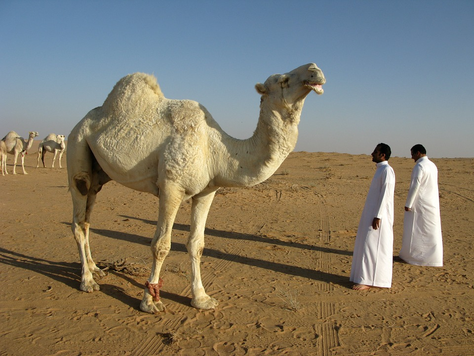 Aràbia Saudita amb Justo Ruiz