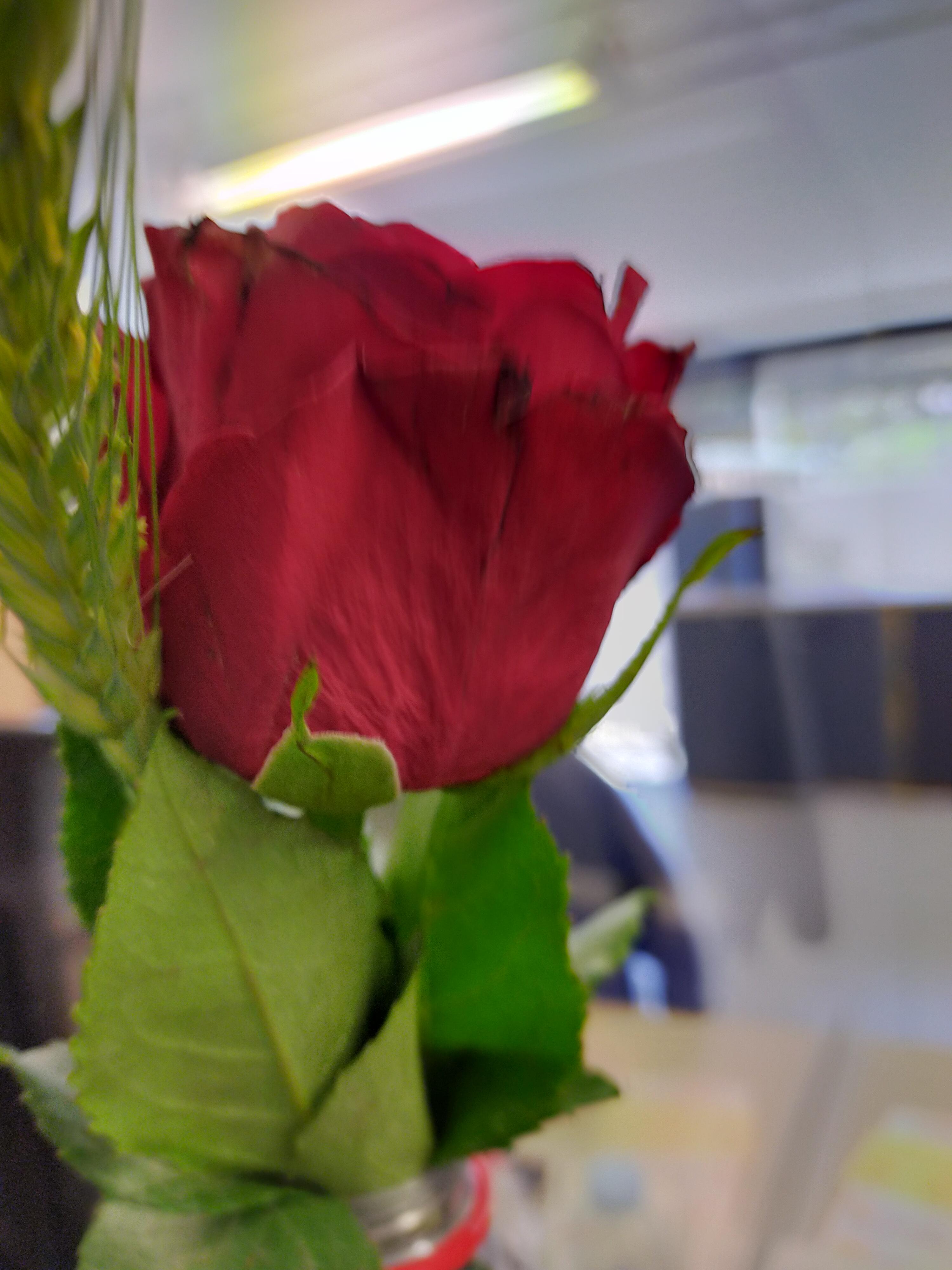 L'important c'est le rose