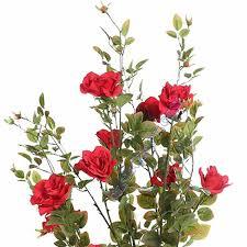 Desde Ransol amb amor:La rosa
