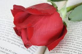 Llibres, roses i cançons