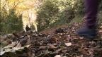 Sant Julià ha senyalitzat i recuperat més de 25 quilòmetres de camins